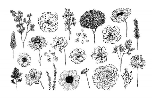 Großer vektor stellte mit botanischer gezeichneter art der elemente in der hand ein
