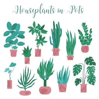 Großes set, sammlung verschiedener zimmerpflanzen