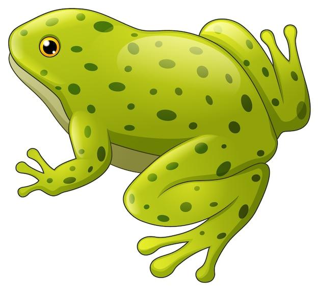 Grün gefleckter frosch getrennt auf weißem hintergrund