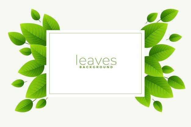 Grün hinterlässt hintergrund mit textraum