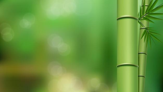 Grüne bambusstämme und -blätter schließen sich mit kopienraum einzeln auf grünem unscharfem hintergrund an