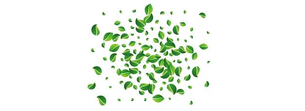 Grüne blätter frühling vektor panorama weißer hintergrund. windgrün-grenze. olive leaf blur-broschüre. laub-bewegungs-hintergrund.