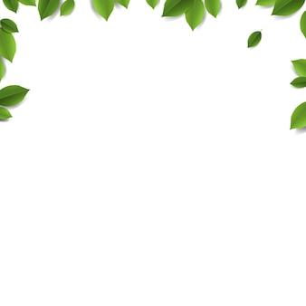 Grüne blätter rahmen isoliert