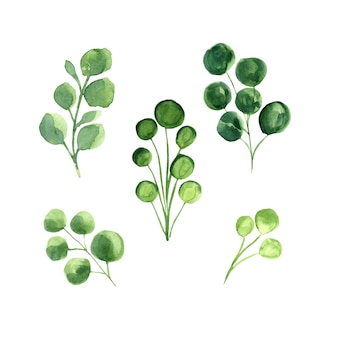Grüne blätter vektor aquarell set.