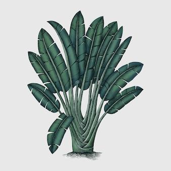 Grüne botanische pflanze