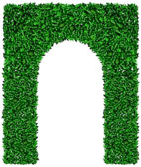Grüne efeutrauben-bogenbeschaffenheit
