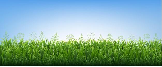 Grüne grasgrenze mit blumen blau hintergrund