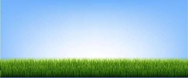 Grüne grasgrenze und blauer himmel, vektor-illustration