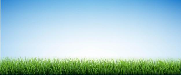 Grüne grasgrenze und blauer himmel