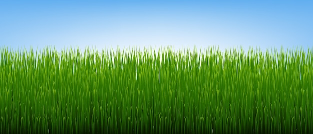 Grüne grasgrenze und hintergrund des blauen himmels mit gradient mesh, illustration