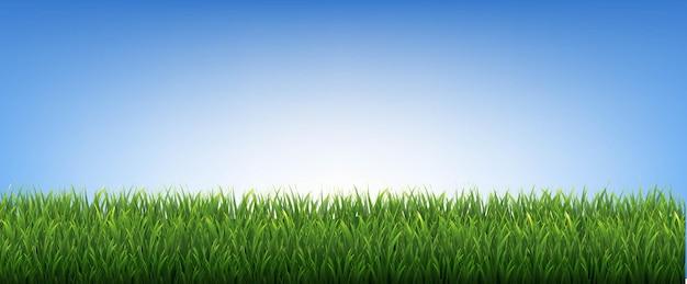 Grüne grasgrenzen und blauer hintergrund