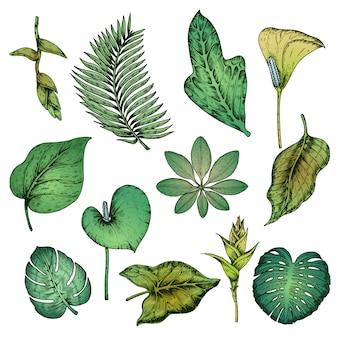 Grüne hand gezeichnete tropische pflanzen set