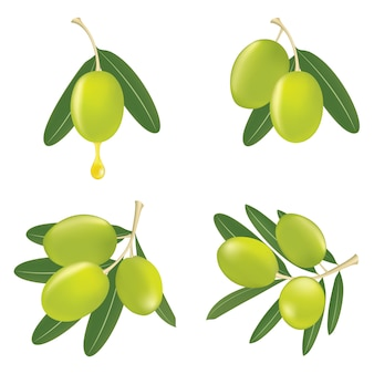 Grüne olivenzweige