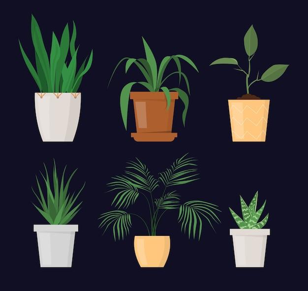Grüne pflanze im topfsatz isoliert. gartenhobby, schöner blumentopf. zimmerpflanze.