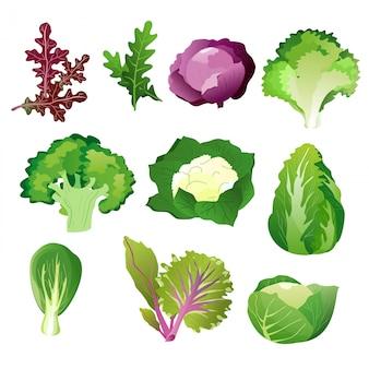 Grüne salatblätter. vegetarisches gesundes nahrungsblattset lokalisiert auf weißem hintergrund.
