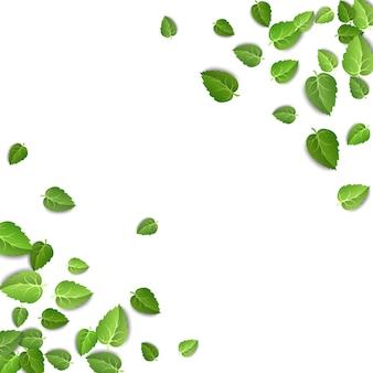 Grüne teeblätter isoliert auf weißem hintergrund