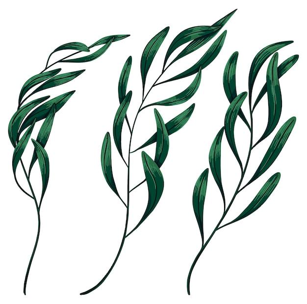 Grüne tropische baumzweige eingestellt. handgezeichnete vektor-illustration. farbige realistische zeichnung von exotischen pflanzenblättern isoliert auf weiß. botanische cliparts für design.