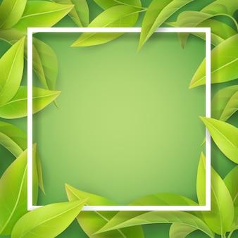 Grüne weiche blätter und weißer rahmen. detailliertes blatt einer teepflanze oder eines baumes. hintergrund für saisonale einladungskarte des frühlings.