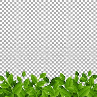 Grüne zweige mit blättern grenze transparent