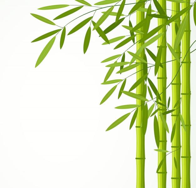 Grüner bambus stammt mit den blättern, die auf weißem hintergrund lokalisiert werden.