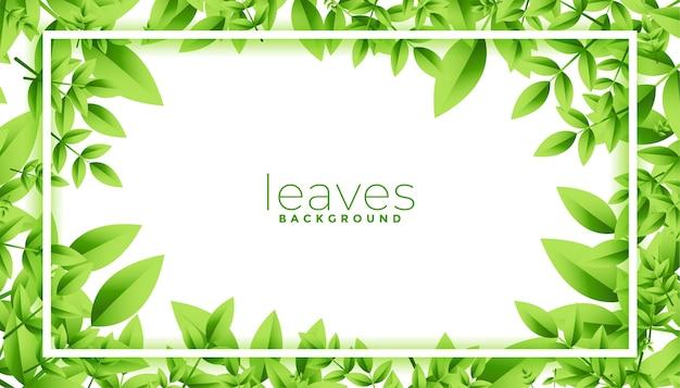 Grüner blätterrahmen mit textraumdesign