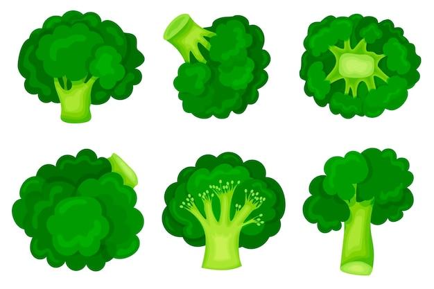 Grüner brokkoli in einem modernen flachen stil. einstellen. gesunde ernährung. symbol lokalisiert auf weißem hintergrund.