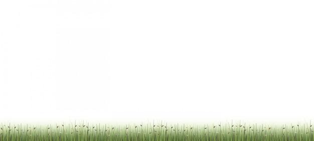 Grüner feldhintergrund im freien lokalisiert auf weiß.