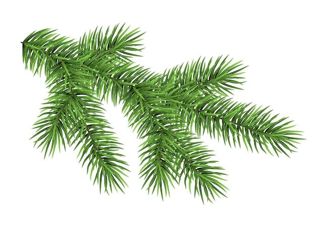 Grüner fichtenzweig lokalisiert auf weißem hintergrund.