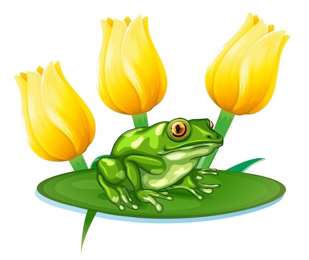 Grüner frosch auf seerose