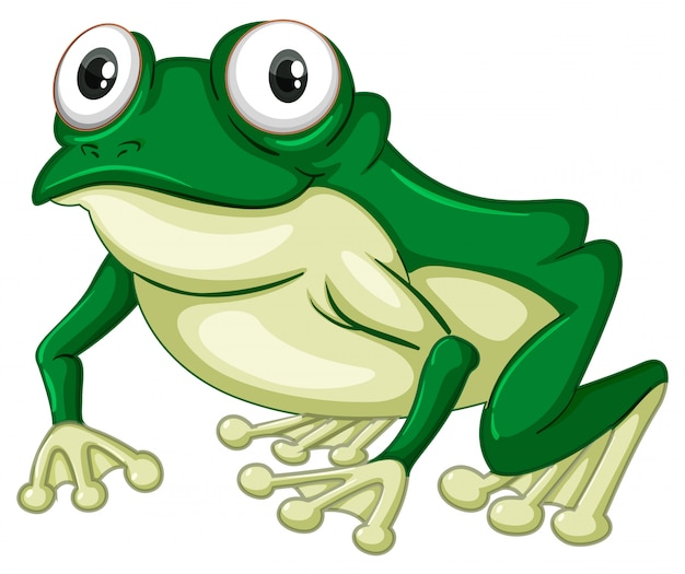 Grüner frosch auf weißem hintergrund