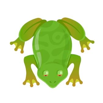 Grüner frosch mit roten augen. zeichen-vektor-illustration. von oben betrachten