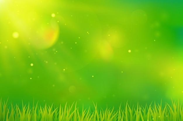 Grüner frühlingshintergrund. verschwommenes abstraktes design mit gras und sonnenlicht. .