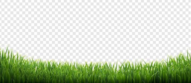 Grüner gras-isolierter transparenter hintergrund