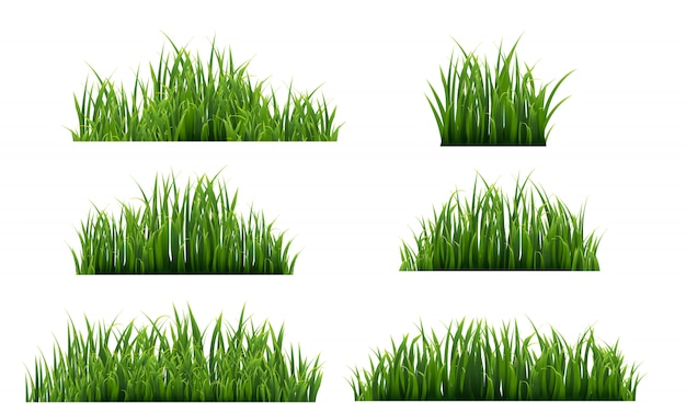 Grüner gras-isolierter weißer hintergrund