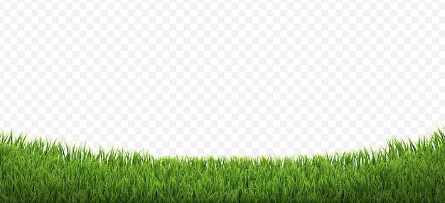 Grüner grasrand isolierter transparenter hintergrund