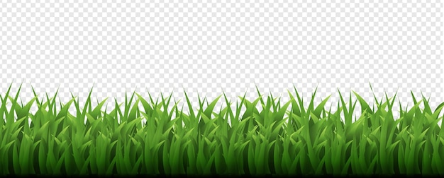 Grüner grasrand transparenter hintergrund