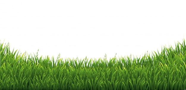 Grüner grüner gras-isolierter weißer hintergrund