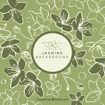 Grüner hintergrund mit jasmin-skizzen