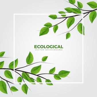 Grüner ökologischer zweig-sauberer hintergrund