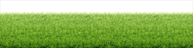 Grüner rasen. grenze von frischem grasfeld.
