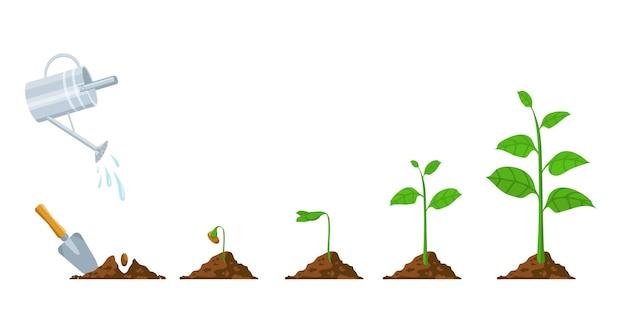 Grüner spross wächst. sämling- und pflanzphase. pflanze mit blättern, bohnen im boden, gießkanne. pflanzen wachsen fortschrittsvektor infografik. landwirtschaftlicher prozess, umweltentwicklung und pflege