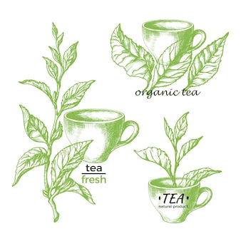 Grüner tee natürliches kräutergetränk satz symbole weinlesezeichen botanische hand gezeichnete illustration