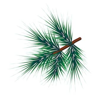 Grüner üppiger fichtenzweig. tannenzweige-vektor-illustration-clipart