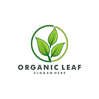 Grünes blatt-logo-design-vektor