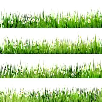 Grünes gras und kamille in der natur.