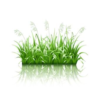 Grünes gras,