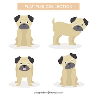 Grundpaket von pugs mit flachem design