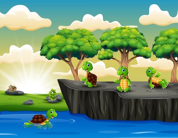 Gruppe der schildkröte, die auf der klippe spielt