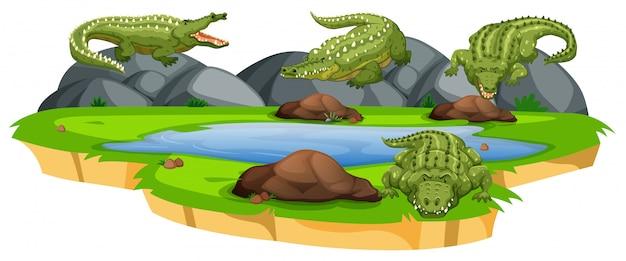 Gruppe des krokodils im teich