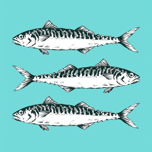 Gruppe makrelen auf blauem hintergrund